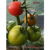 Семена томата Гамаюн