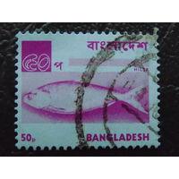 Бангладеш.  Морская фауна.