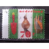 Нидерланды 1996 Огородничество, лук