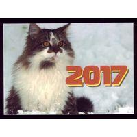 1 календарик 2017 год Кот