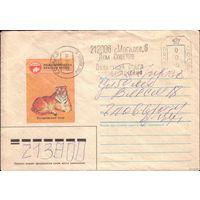 1985 год Уссурийский тигр