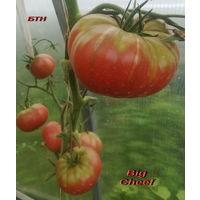 Семена томата Big Cheef(Большой Чиф )