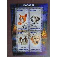 Руанда   2013г. Собаки.