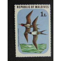 Мальдивы. Фауна.
