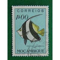 Мозамбик.  Рыбы.