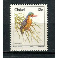 Сискей (Южная Африка) - 1985 - Птицы - [Mi. 74] - полная серия - 1 марка. MNH.