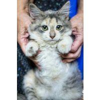 Айрис - чудесная котейка в дар
