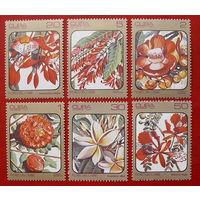 Куба. Цветы. ( 6 марок ) 1984 года.