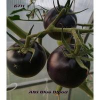 Семена томата Почти голубая Кровь(Alki Blue Blood)