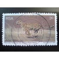 ЮАР 1976 гепард