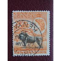 Британская колония Кения , Уганда, Танганьика 1954 г. Королева Елизавета II.  Лев.