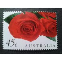 Австралия 1999 розы, Валентинов день