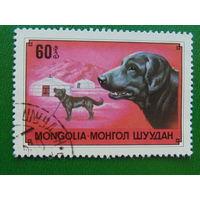 Монголия 1978г. Фауна.