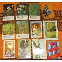 Календарики - флора-фауна