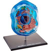 Анатомическая модель Животная клетка от Fame Master
