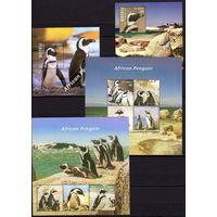 Гамбия 2014 Фауна Птицы Пингвины
