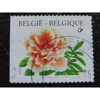 Бельгия 1997г. Флора.