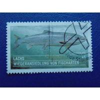 Германия 2014г. Рыбы.