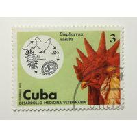 Куба 1975. Развитие ветеринарной медицины, животных и циклов заболеваний. Домашние животные.