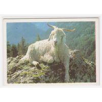 Календарик В горах 1990