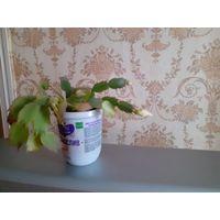 Шлюмбергера абрикосовая  цена актуальна  09 июля