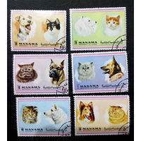 Манама, Бахрейн 1972 г. Собаки и Кошки. Фауна, полная серия из 6 марок #0185-Ф1