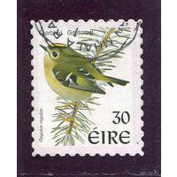 Ирландия. Птица. (из стандартного выпуска)