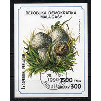 Грибы Мадагаскар 1990 год 1 блок