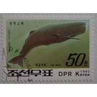 Корея.1992.кашалот