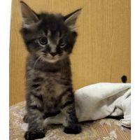 Котенок даром , гомель