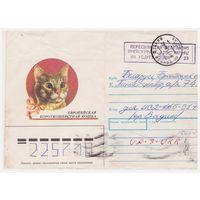 Конверт СССР, прошедший почту. Европейская короткошерстная кошка