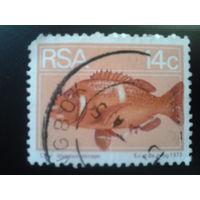 ЮАР 1974 рыба
