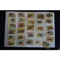 Спичечные этикетки , СССР , аквариумные рыбки