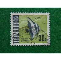 Танзания. Рыбы.