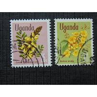 Уганда.  Цветы.