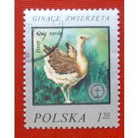 Польша. Фауна. ( 1 марка ).