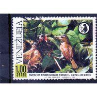 Венесуэла. Ми-1770.Фауна.Красноглазые виреон, молодые птицы Серия: охрана природы. 1968.