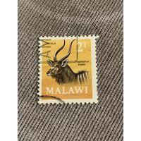 Малави. Tragelaphus angasi. Марка из серии
