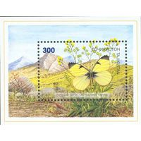 Бабочки и мотыльки Таджикистан 1998 год 1 блок