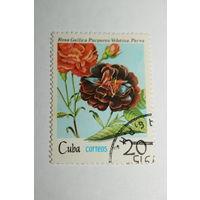 Куба 1979 роза, гаш