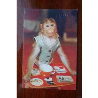 Календарик с обезьяной 1991