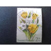 Финляндия 2011 пасха, тюльпаны
