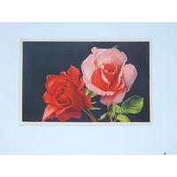 Открытка цветы 1951  9х14 см