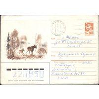 1985 год С.Куприянов Лоси на поляне 85-12
