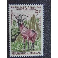 Сенегал. Фауна.