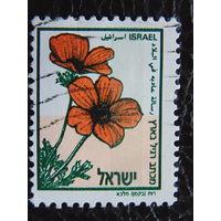 Израиль. Флора.
