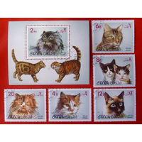 Оман. Кошки. ( Блок и 5 марок ) 1971 года.