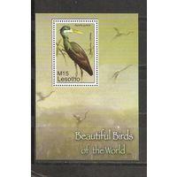 Лесото Птицы