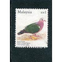Малайзия. Изумрудный голубь