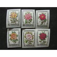 Сирия 1980 Розы Всемирная цветочная выставка в Дамаске чистая полная серия